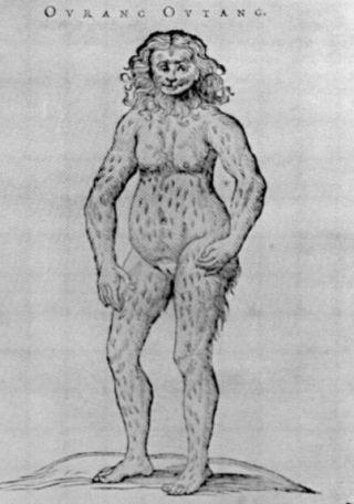 'Ourang Outang' van Bontius (wiki)