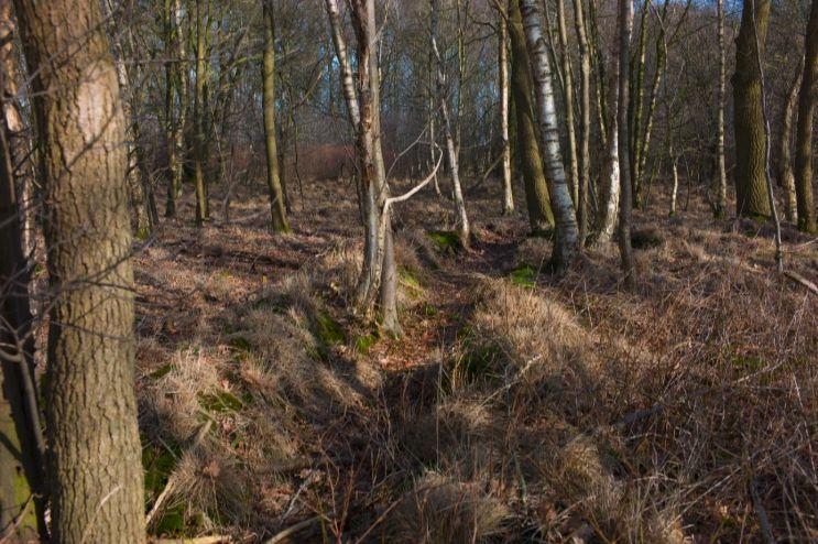 Schuttersput in Hoogersmilde, onderdeel van de Assener Stellung (CC BY-SA 3.0 - wiki - Frits Pentenga)