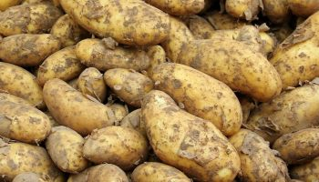 Aardappelbrood - Aardappels (CC0 - Pixabay - pixel2013)