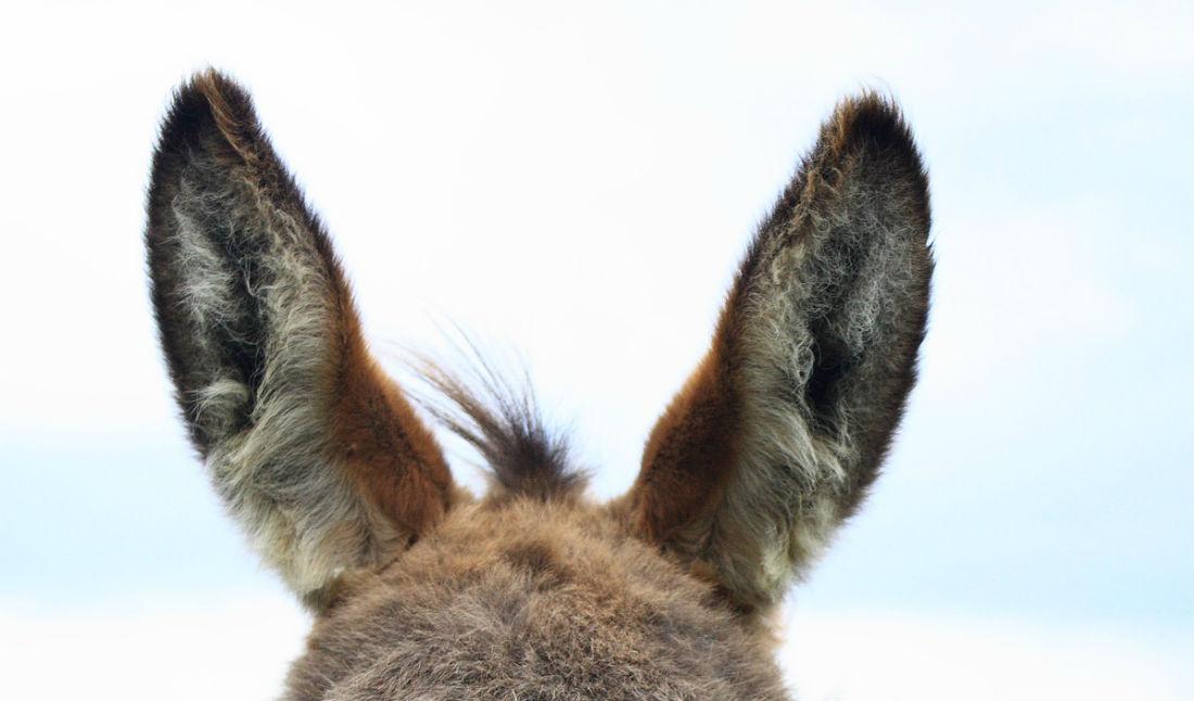 Iemand een oor aannaaien – Herkomst en betekenis