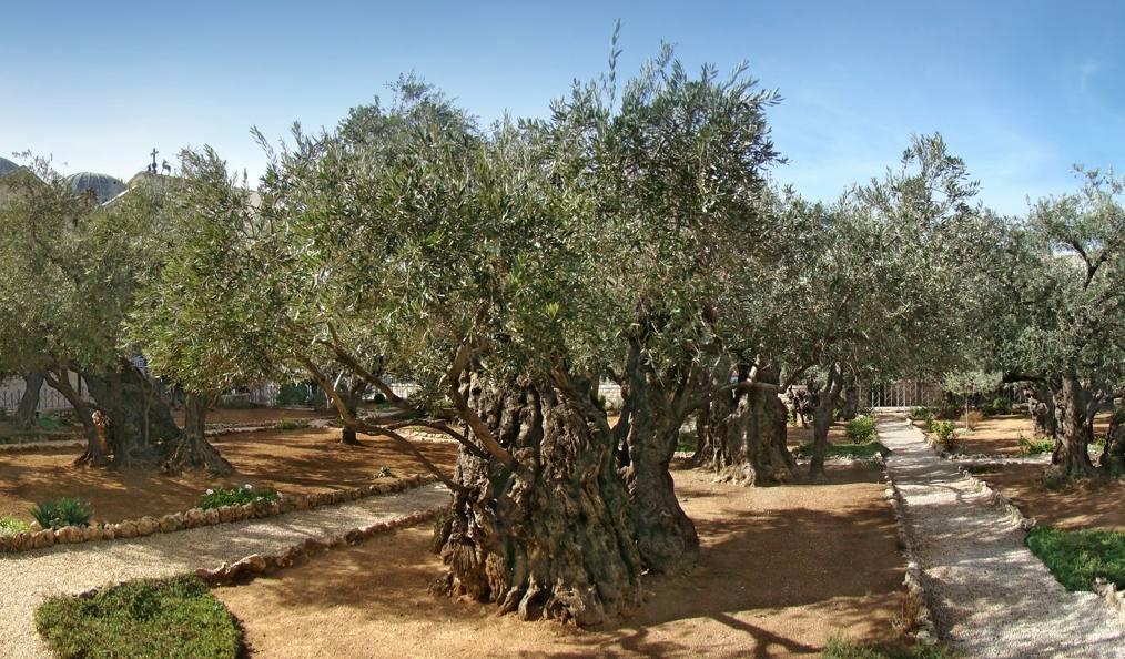 De tuin van Getsemane – Jezus in doodsangst