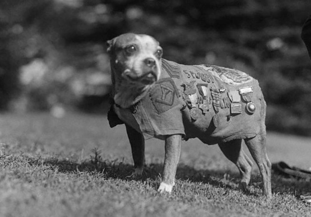 Sergeant Stubby, de meest gedecoreerde hond uit de Eerste Wereldoorlog
