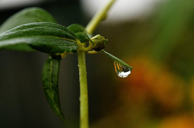 Petrichor – De geur van de regen na een periode van droogte