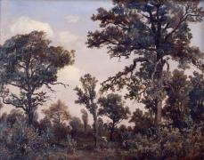 Théodore Rousseau; The Large Oak Tree, Forest of Fontainebleau; 1839; oil on paper mounted on canvas; 31.8 x 41.3 cm; Saint Louis Art Museum