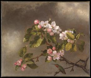 Martin Johnson Heade; Hummingbird and Apple Blossoms; 1875; oil and canvas; 31 x 35.9 cm; The Metropolitan Museum of Art