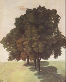 Albrecht Dürer; Three Lime Trees; c.1489; watercolor; 34.3 x 27.9 cm