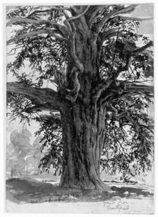 Helen Paterson Allingham; The Lower Trunk of a Yew Tree, at Northfield; brush drawing in grey ink; 190 x 137 mm; British Museum