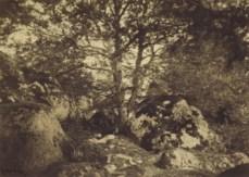 fontainebleu forest photo