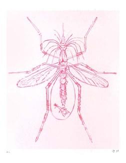 bourg_mosquito