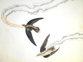 "Justin Gibbens Bird of Paradise XVI- Fire-breathing Chimney Swift Watercolor, graphite, gouache, oolong tea on paper 2008 23"" x 30"""