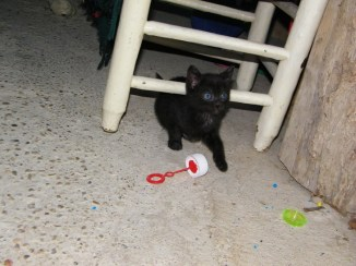 nuevos-inquilinos-gatos-7