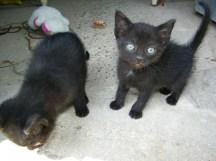 nuevos-inquilinos-gatos-6