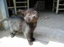 nuevos-inquilinos-gatos-5