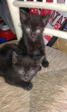 nuevos-inquilinos-gatos-2