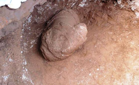 pidna1-thumb-large