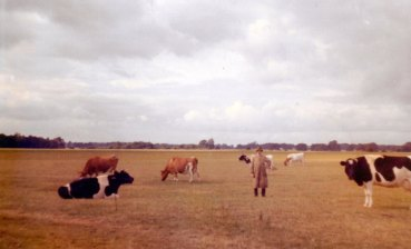 George Bungay with his cows