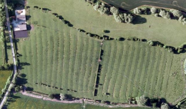 Ridge and Furrows, Poplars Farm