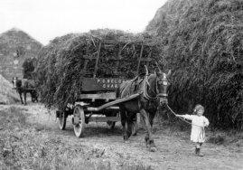 Belcher Wagon 1916