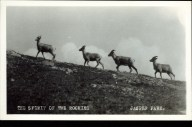 The spirit of the Rockies, Jasper Park, ciirca 1940s. peel.library.ualberta.ca/postcards/PC010514.html