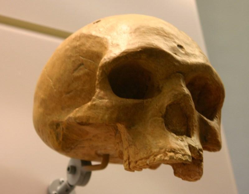 Florisbad Skull