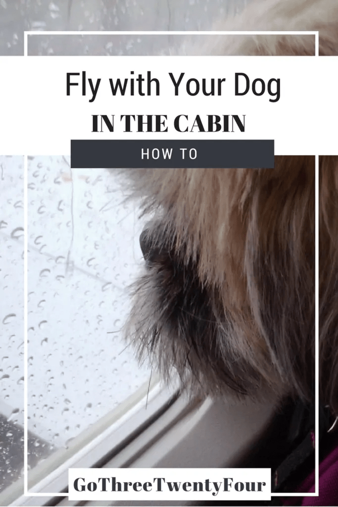 how-to-fly-with-your-dog-in-the-cabin-design-3