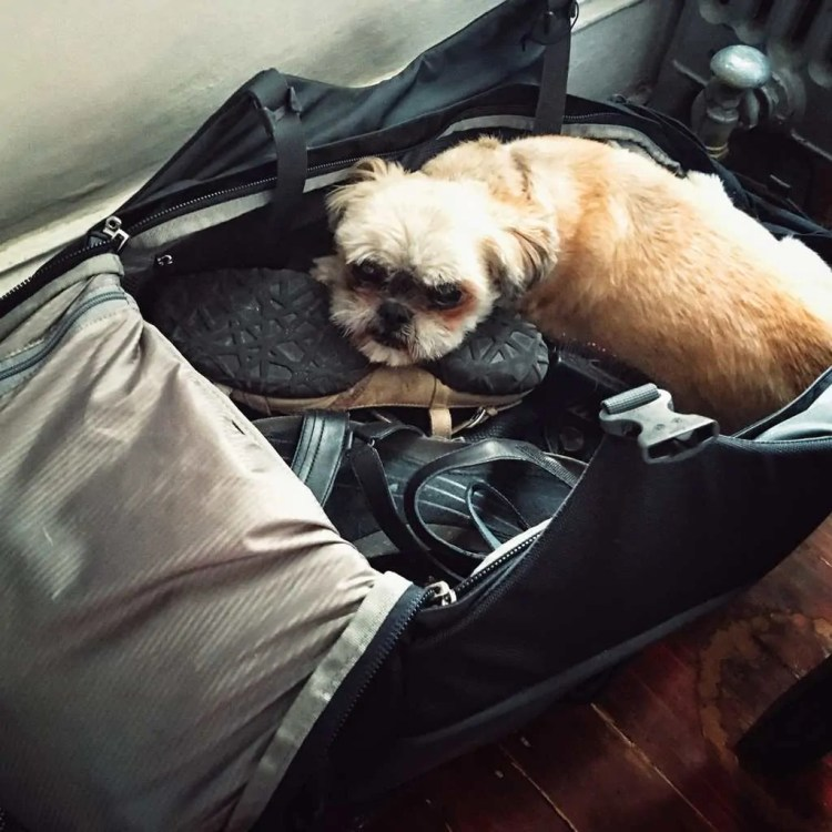 My dog napping in my Osprey suitcase