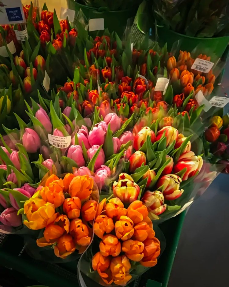 Dutch Tulips at the Airport
