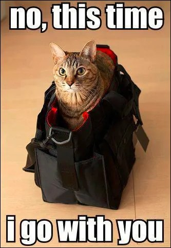 cat travel meme