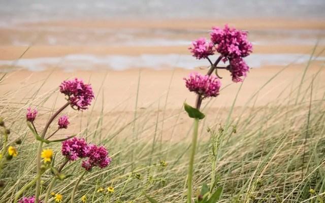 Juno Beach in Normandy