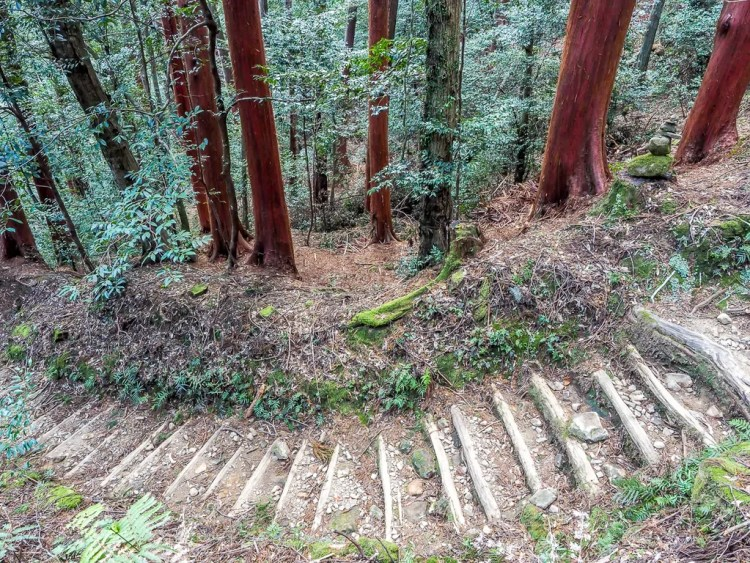 Red Owase Hinoki (cypress) trees on Kumano Kodo