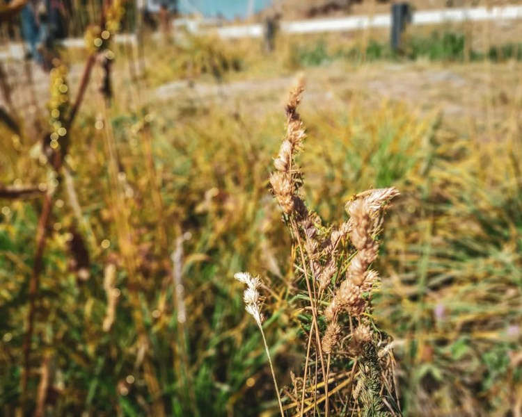 Drying grass at Big Almaty Lake