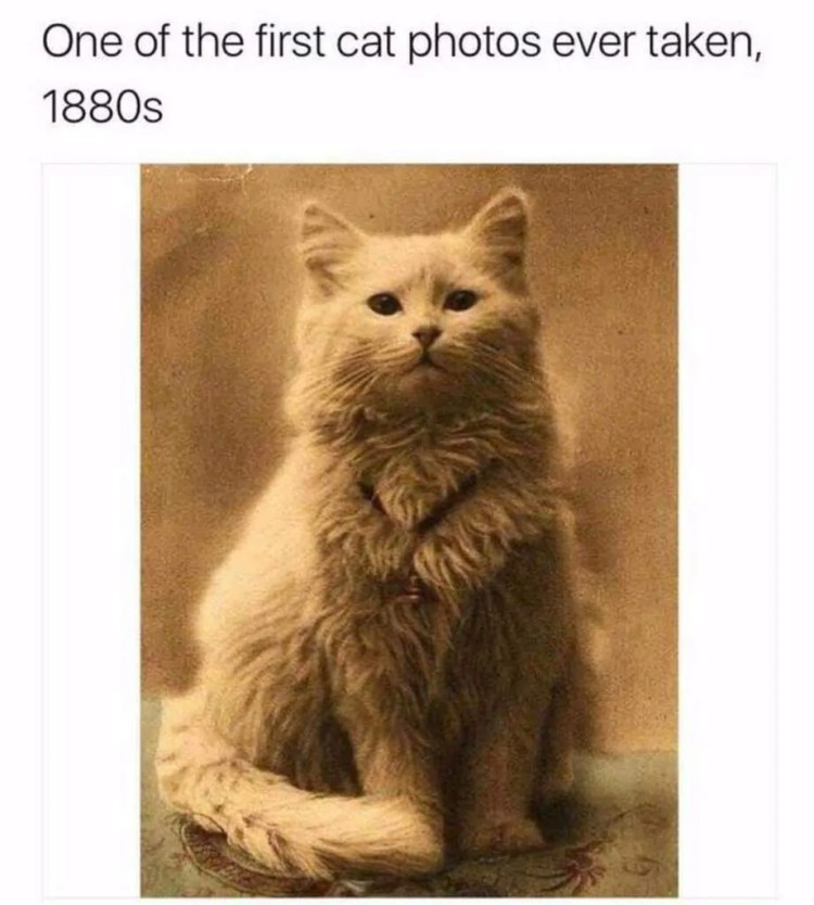 historic cat meme