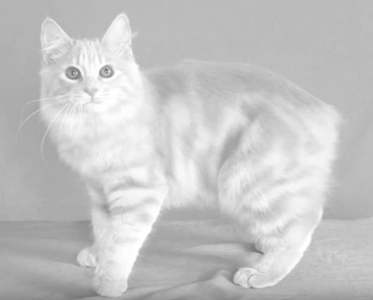 max-cat