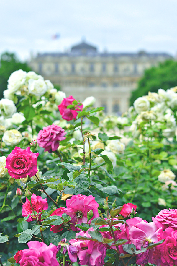 two gardens in paris
