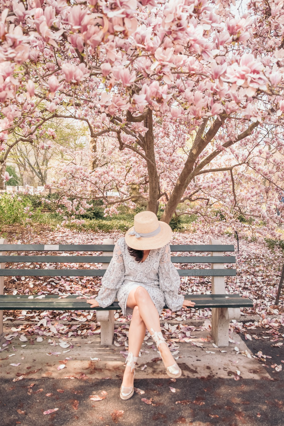 Pink Blooms in Central Park