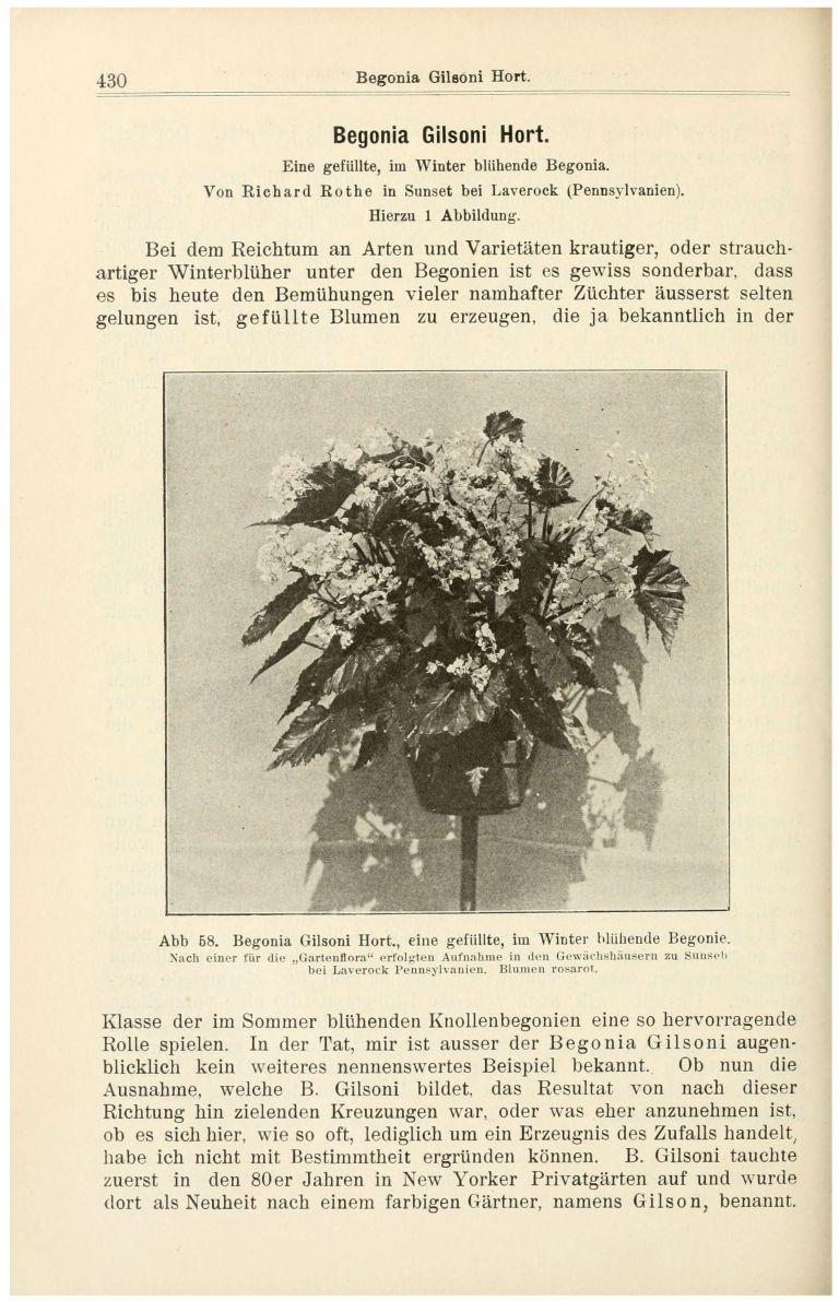 Gartenflora. - Page 430 (Text) copy