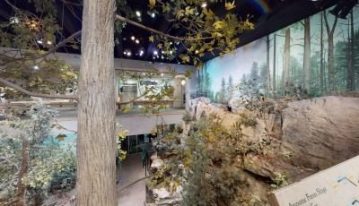 North Carolina Museum of Natural Sciences: Mountain Cove