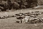 Gettysburg-Dead-Soldiers-th