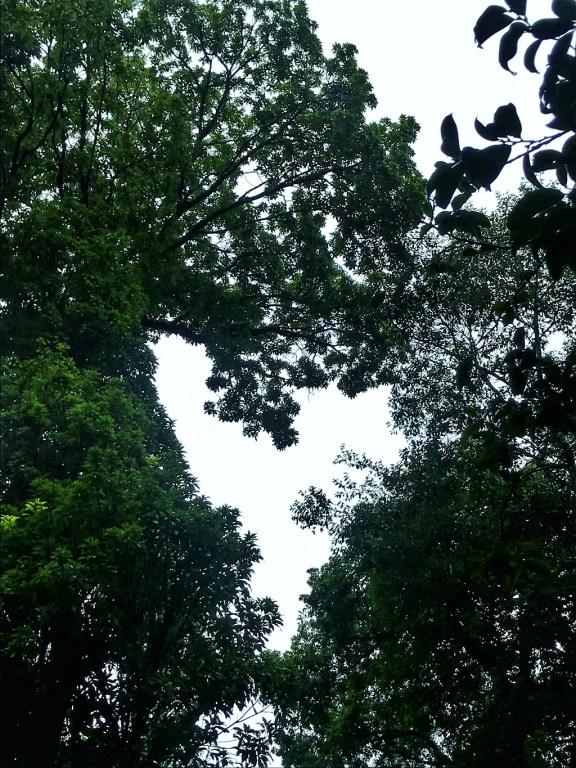 Mawphlang Sacred Forests - Meghalaya - adventure india