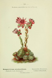Nouvelle flore coloriée de poche des Alpes et des Pyrénées. v.1. Paris,Klincksieck,1906-1912. http://biodiversitylibrary.org/item/39967