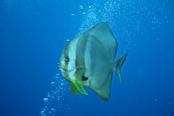 Manta Reef in Tofo, Mosambik