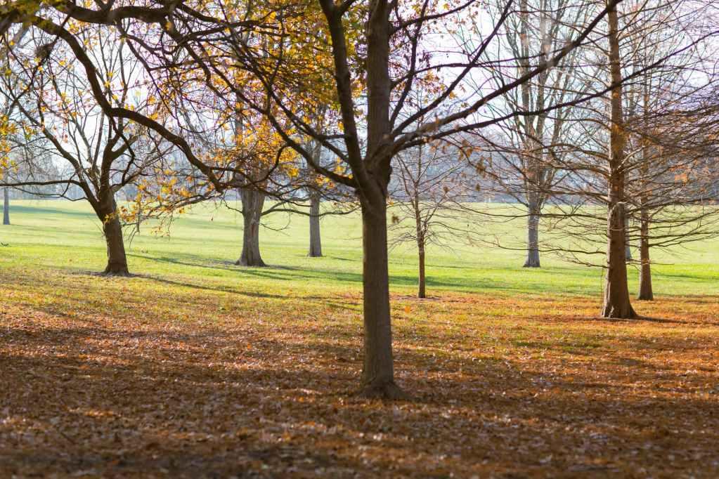 peaceful meadows of autumn park