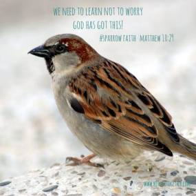 dont_worry_sparrow_faith