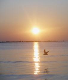 Early Bird - Mamaia Beach