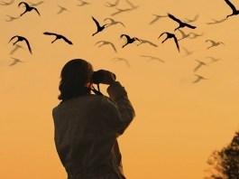 Bird Watching, Birds,