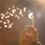 花粉症の熱