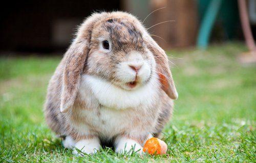 明日の約束のウサギ