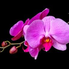 Орхидеи и добро настроение