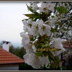 Градината през пролетта