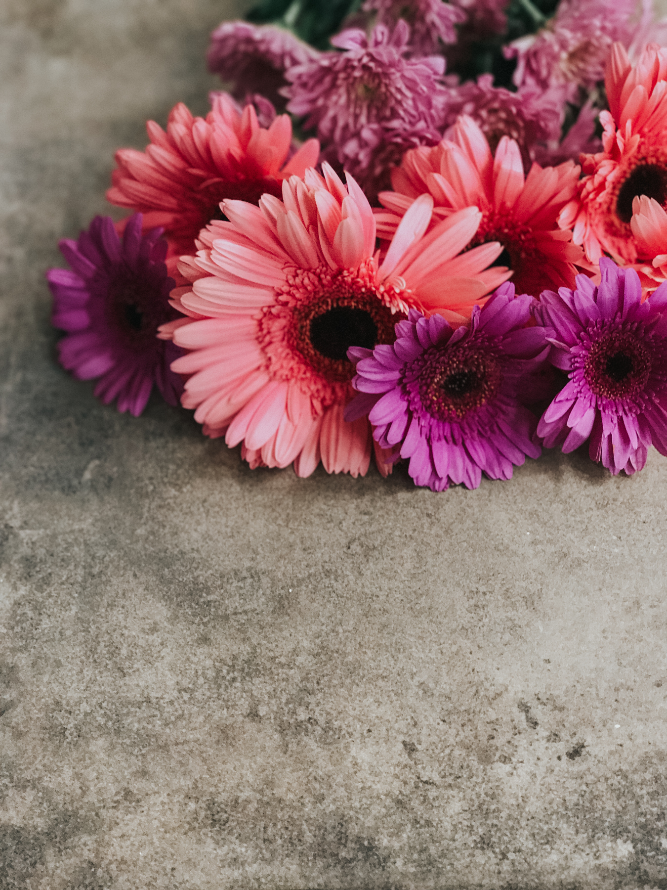 floral photography, pink and purple flowers